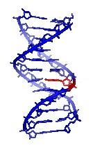 Rechtliche Erweiterung der DNA-Analyse